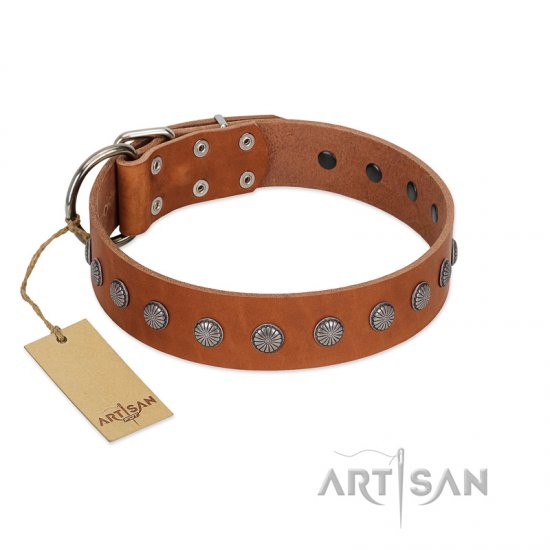 """Little Floret"" Fashionable FDT Artisan Tan Leather Amstaff Collar with Silver-Like Adornments"