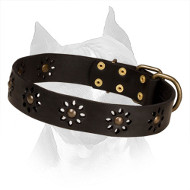 'Spring mood' Leather Amstaff Collar with Amazing Punched Flowers