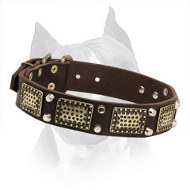 Amstaff Leather Collar with Brass Plates and Nickel Cones