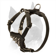 American Staffordshire Terrier Puppy Leather Harness with Spiked Chest Plate