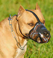Barbed Wire Painted Leather American Staffordshire Terrier Muzzle