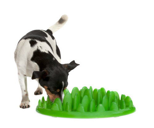 Green Plastic American Staffordshire Terrier Feeder