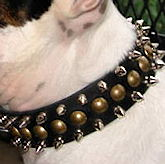 Leather spiked dog collar for Amstaff