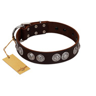 """High and Mighty"" FDT Artisan Classy Brown Leather Amstaff Collar with Embellished Brooches"