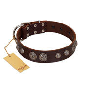"""Choco Brownie"" FDT Artisan Brown Leather Amstaff Collar Adorned with Silver-Like Conchos"