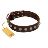 """Gape Buster"" FDT Artisan Brown Leather Amstaff Collar with One Row of Studs"