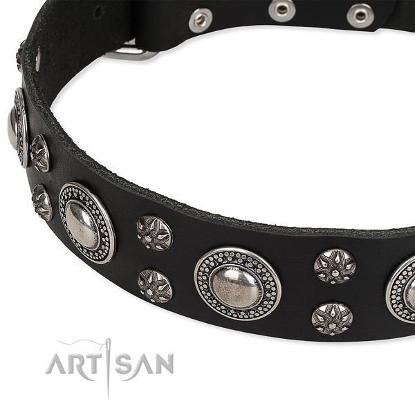 Comfy wearing studded dog collar of top notch genuine leather