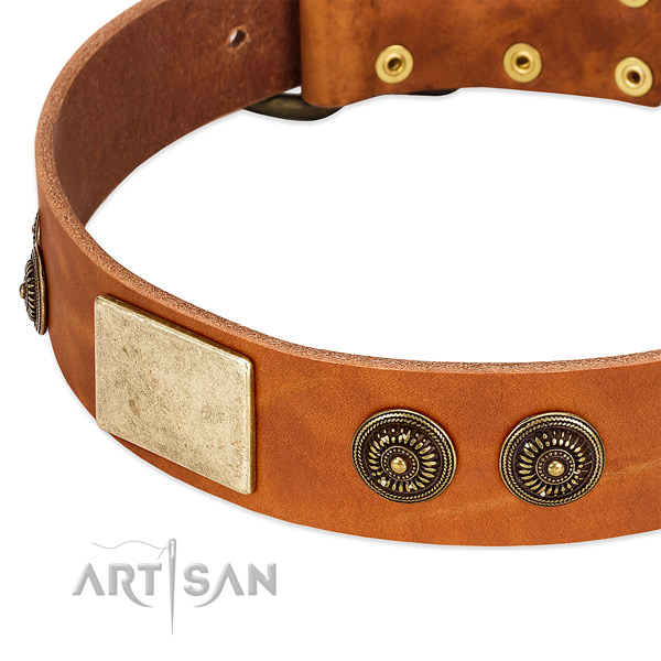 Incredible dog collar crafted for your handsome dog