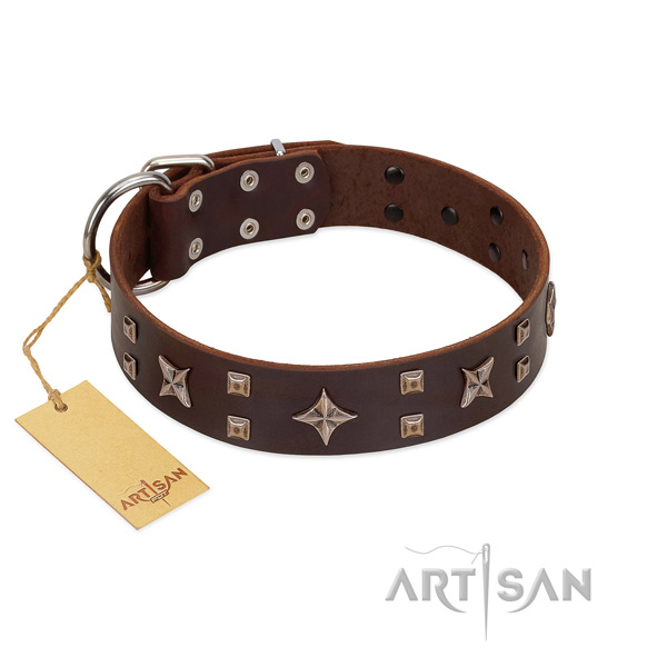 Top notch leather dog collar for everyday walking your four-legged friend