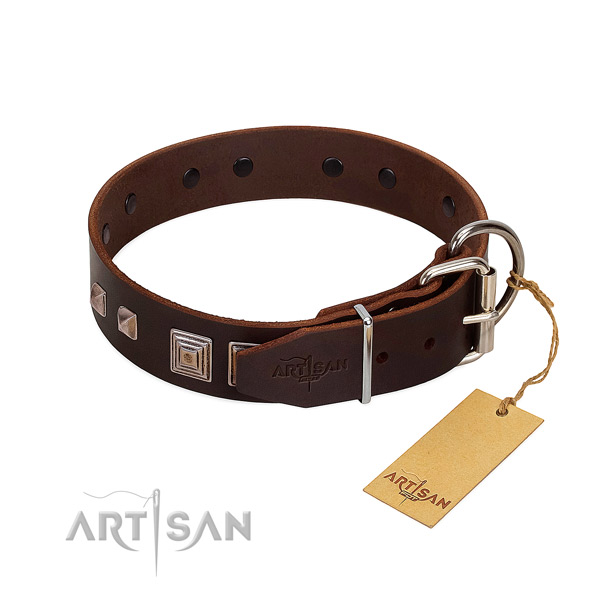 Daily walking natural leather dog collar with awesome embellishments