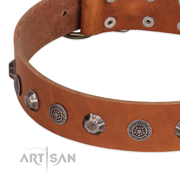 Unusual leather collar for your four-legged friend daily walking