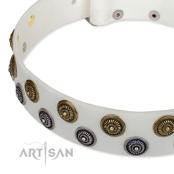 Walking studded dog collar of top quality genuine leather