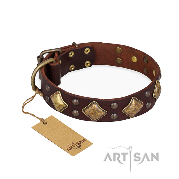 Everyday walking easy to adjust dog collar with rust resistant fittings
