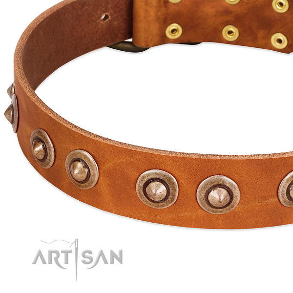 Durable embellishments on leather dog collar for your pet