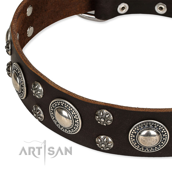 Comfortable wearing studded dog collar of fine quality leather
