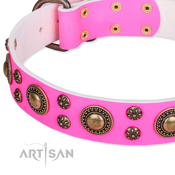 Stylish walking studded dog collar of quality full grain natural leather