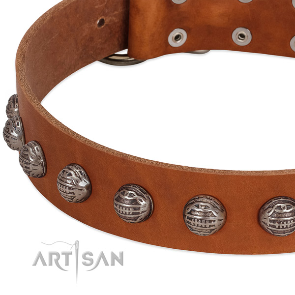 Remarkable full grain leather dog collar with corrosion proof adornments
