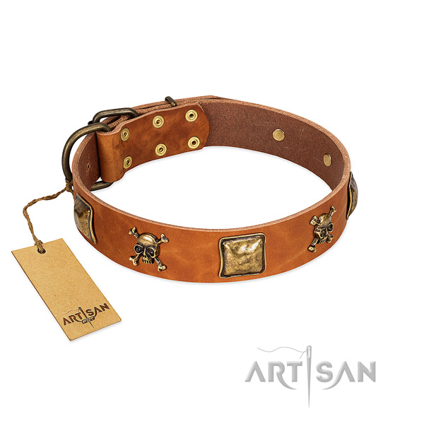 Remarkable leather dog collar with durable embellishments