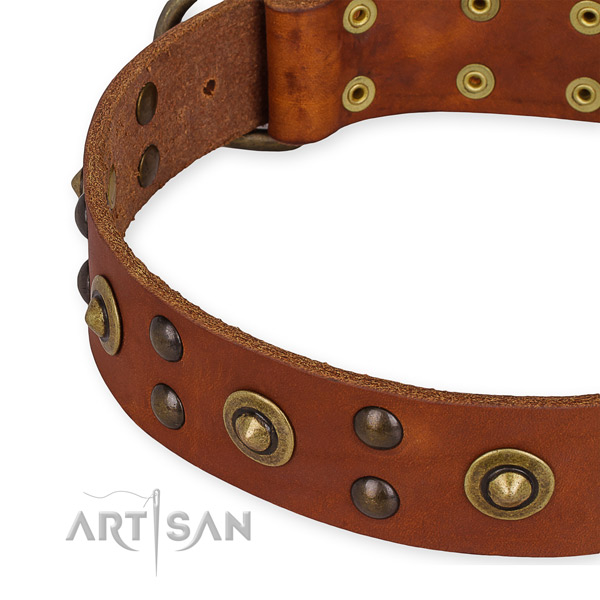 Genuine leather collar with corrosion proof hardware for your impressive dog