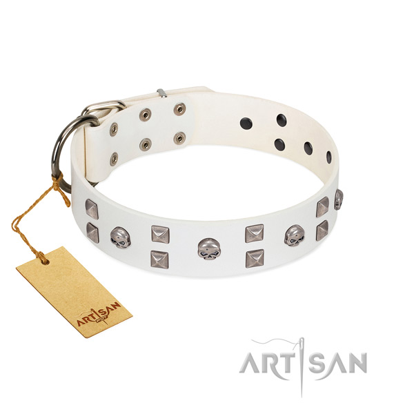 Impressive leather dog collar with embellishments