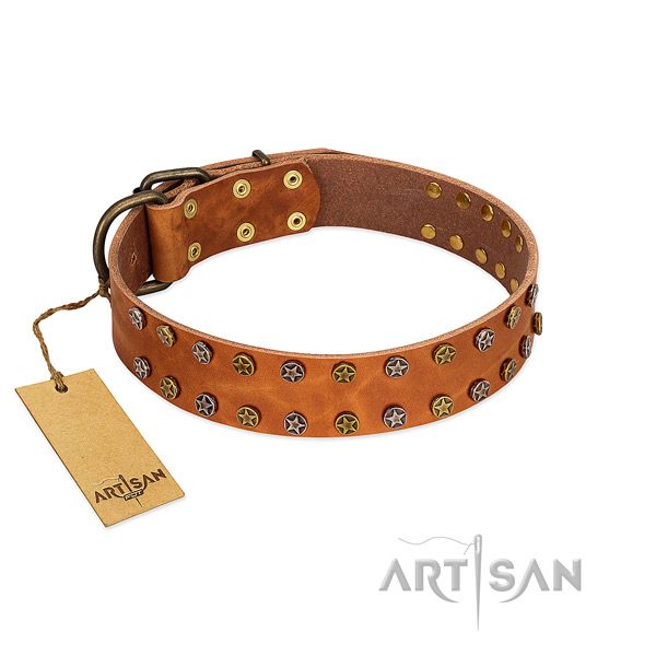 Walking flexible full grain leather dog collar with adornments