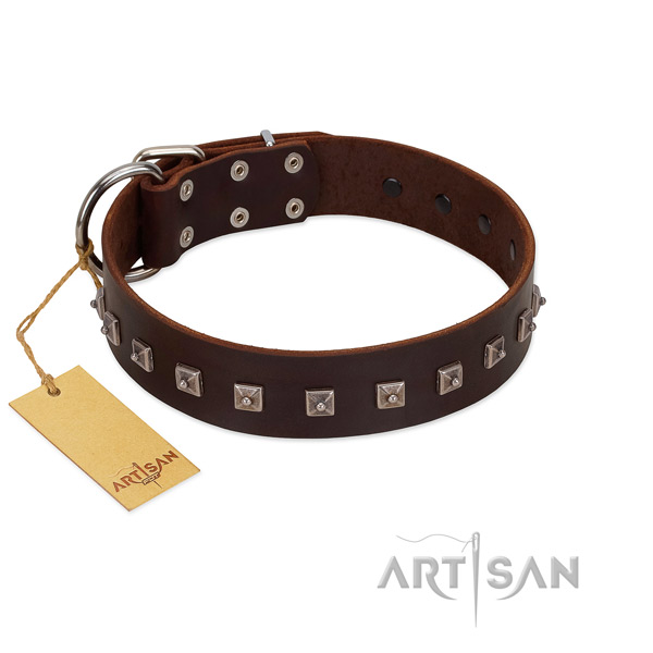 Unusual studded leather dog collar