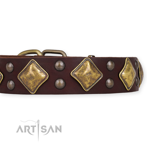 Full grain leather dog collar with incredible durable embellishments