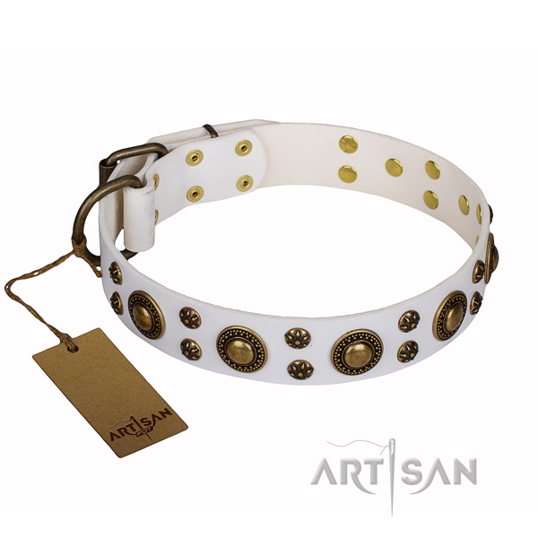 Daily walking dog collar of reliable full grain natural leather with embellishments