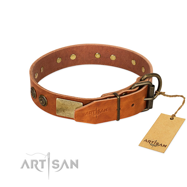 Corrosion proof buckle on full grain natural leather collar for walking your doggie