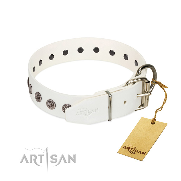 Fashionable genuine leather collar for your four-legged friend