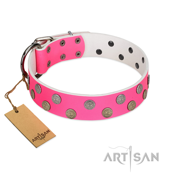 Stylish studs on genuine leather collar for walking your dog