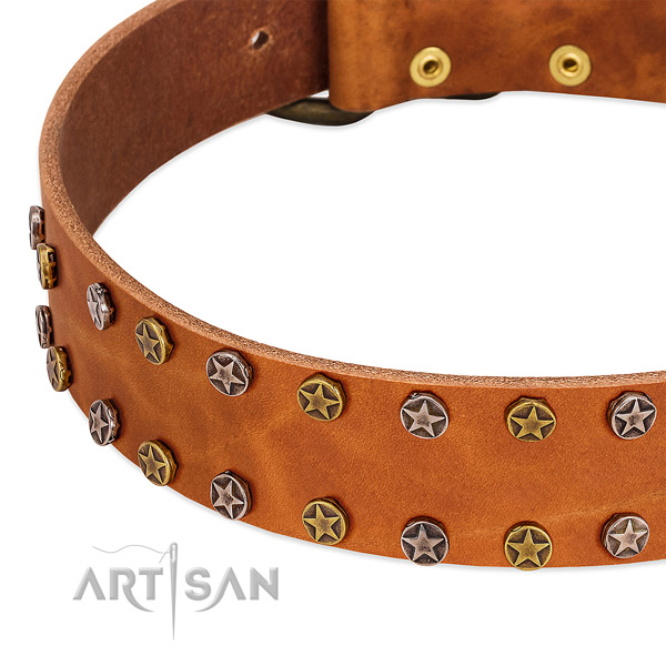 Daily walking full grain natural leather dog collar with awesome adornments