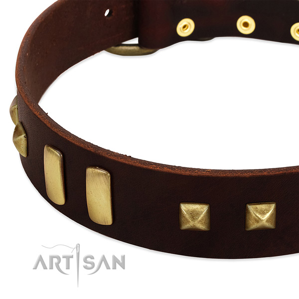 Quality genuine leather dog collar with adornments for daily walking