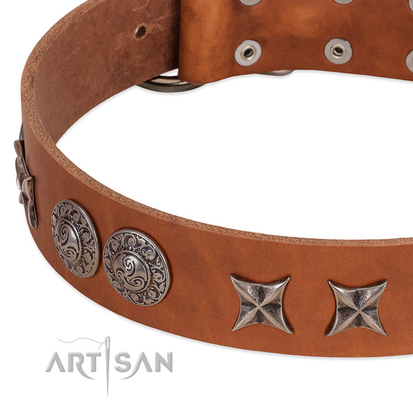 Fashionable full grain leather dog collar with strong hardware