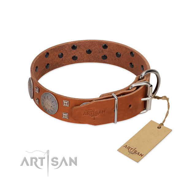 Daily walking dog collar of natural leather with amazing embellishments