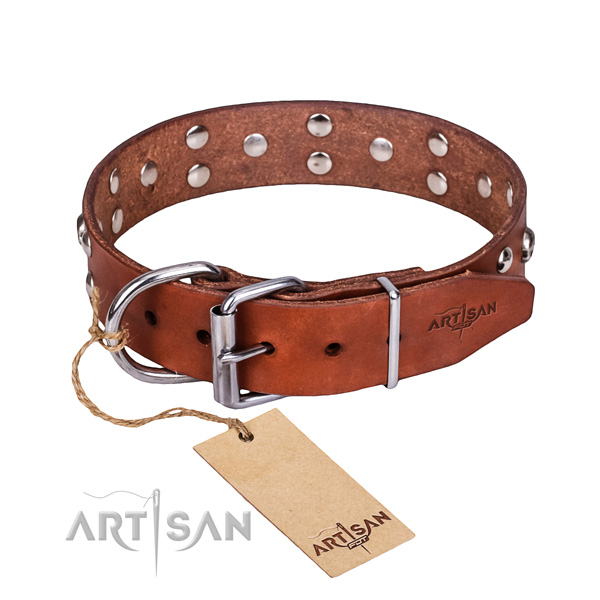 Stylish walking dog collar of finest quality full grain natural leather with studs