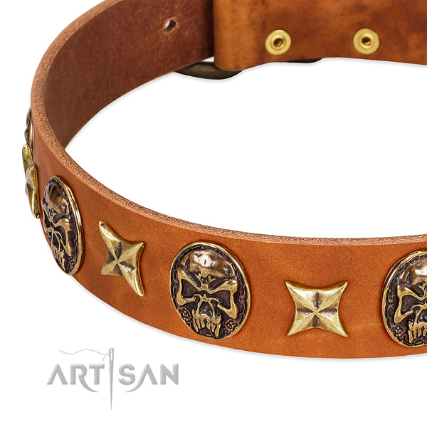 Reliable studs on leather dog collar for your four-legged friend