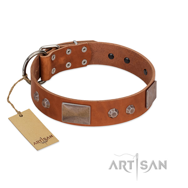 Adorned leather collar for your handsome doggie