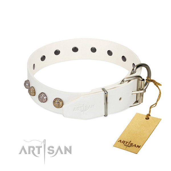Everyday walking best quality leather dog collar with embellishments