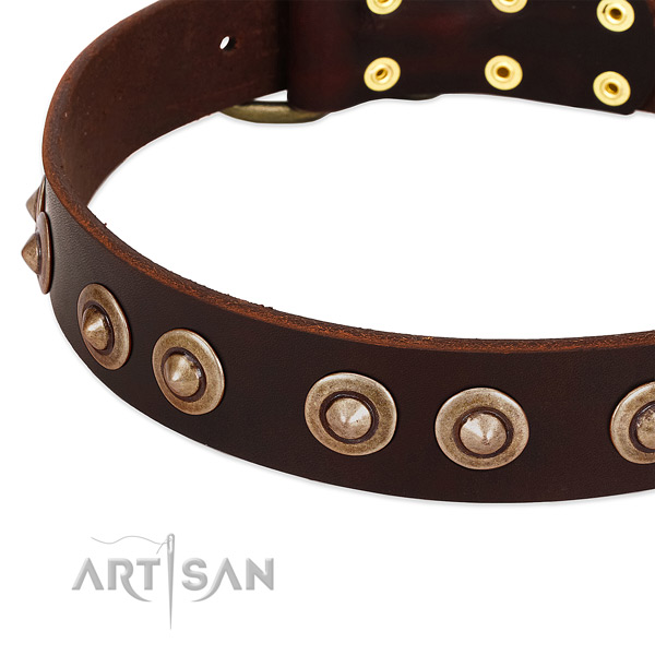 Corrosion proof studs on leather dog collar for your doggie