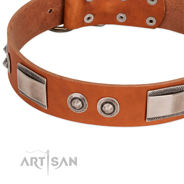 Extraordinary leather collar with adornments for your dog