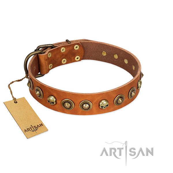 Full grain natural leather collar with stunning studs for your four-legged friend