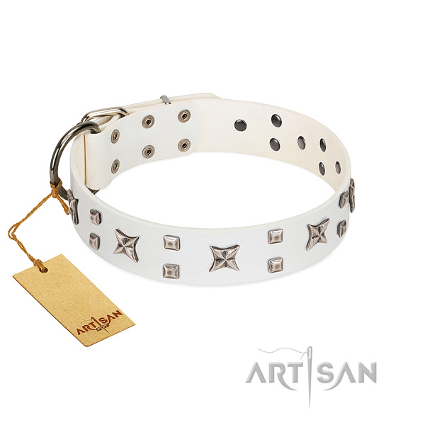 Quality genuine leather dog collar with extraordinary adornments