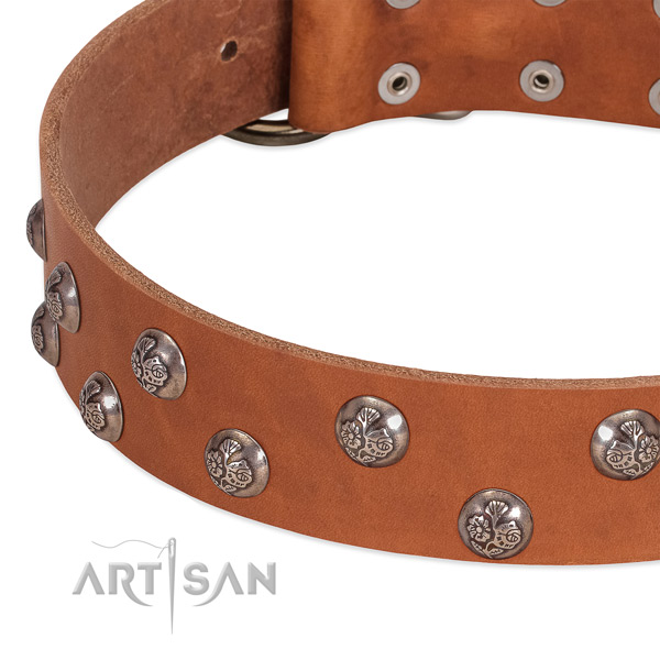 Leather dog collar with strong traditional buckle and studs