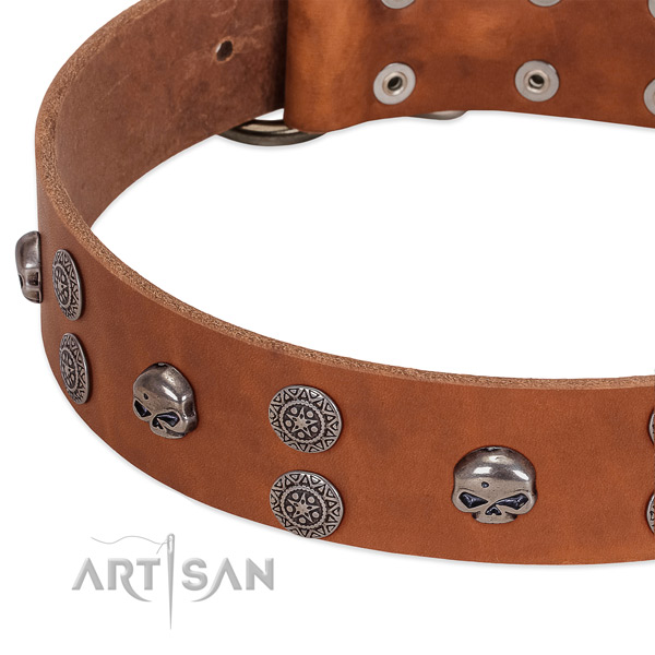 Soft to touch full grain leather dog collar with exceptional studs