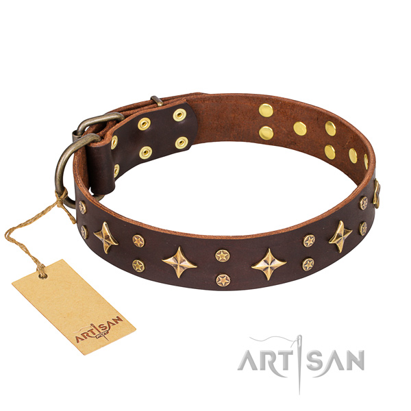 Daily walking dog collar of top quality leather with studs
