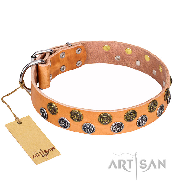Fancy walking dog collar of finest quality full grain leather with adornments