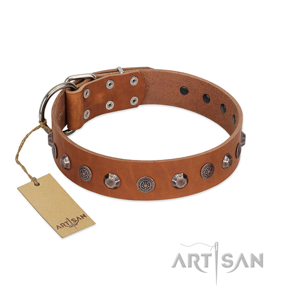 Rust resistant fittings on leather dog collar for everyday walking your dog