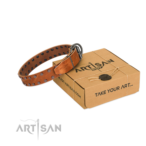 Best quality leather dog collar with studs for your handsome four-legged friend