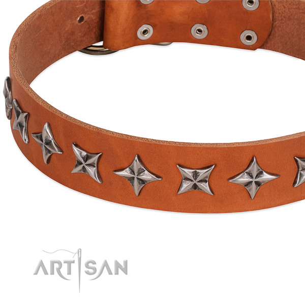 Everyday walking adorned dog collar of fine quality leather